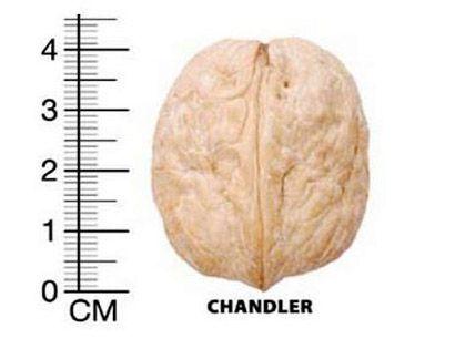 Размер на Oрех Чандлър